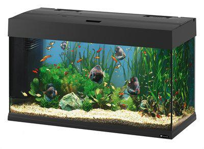 Ferplast dubai aquarium 80 liter zwart for Aquarium 80 litres