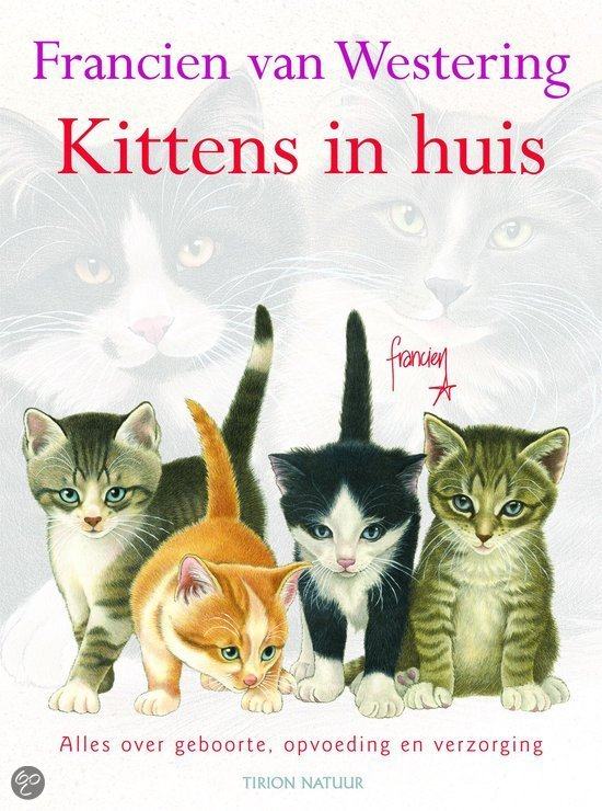Kittens In Huis