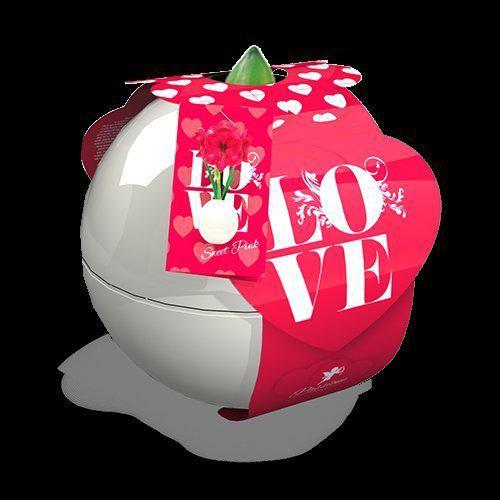 Bloembol love range ball amaryllis sweet pink tuin for Amaryllis sweet pink