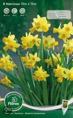 Narcis tete a tete planten