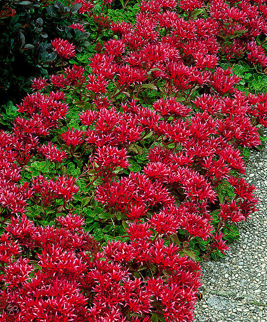 Image Result For Shrubs For Shade Areas Zone