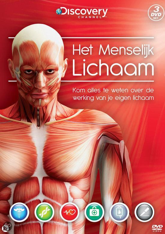 ligging lever in menselijk lichaam