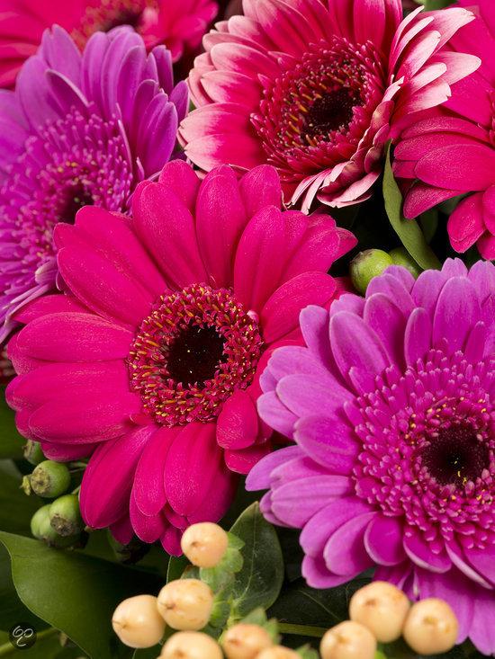 Boeket verse bloemen met kleurrijke gerbera 39 s tuin for Gerbera in de tuin