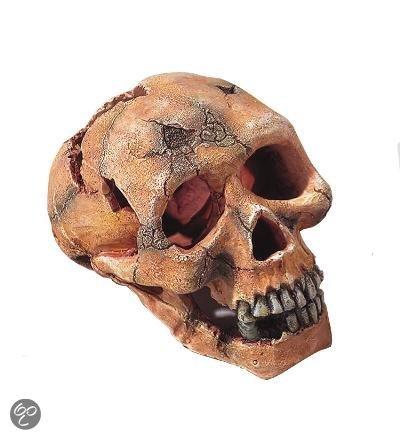 Europet aquarium decoratie schedel aap 15 cm for Decoratie schedel
