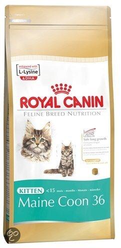 royal canin kitten main coon kattenvoer 4 kg. Black Bedroom Furniture Sets. Home Design Ideas