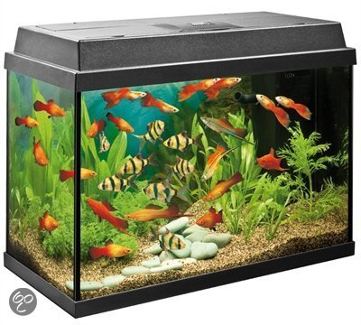 Juwel rekord aquarium 63 liter zwart for Where to buy pet fish