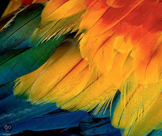 Feathers  - Legpuzzel - 1000 Stukjes