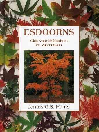 Esdoorns