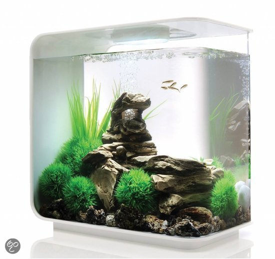 biorb flow aquarium 15 liter wit dier. Black Bedroom Furniture Sets. Home Design Ideas