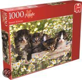 Sweet Kittens 1000 pc