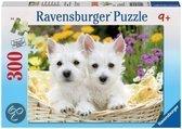Schattige West Highland terrier