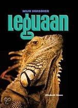 Leguaan