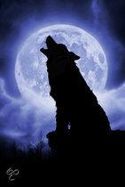 Schmidt Puzzel - Nacht met volle maan
