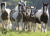 Ravensburger Puzzel - Kudde Paarden