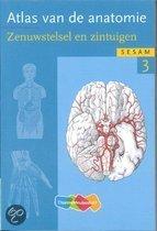 Atlas van de anatomie / deel 3 Zenuwstelsel en zintuigen
