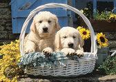 Puppies In Een Mandje