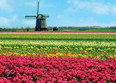Hollands Glorie Tulpen en Molen - Puzzel - 1000 stukjes