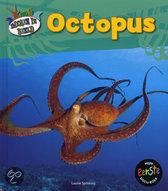 Dieren in beeld Octopus