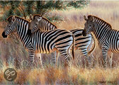 Ravensburger Beautiful Zebras - Puzzel - 1000 stukjes