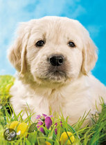 Ravensburger Puzzel Puppy