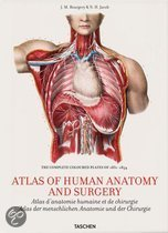 Bourgery, Atlas Of Anatomy
