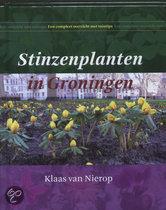 Stinzenplanten in Groningen