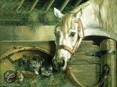 Schilderen op nummer Paard en kitten