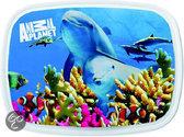 Dolfijn Lunchbox