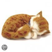 PERFECT PETZZZ Kauwspeelgoed Perfect petzzz orange tabby 30 x 20 x 10 cm - 1 ST