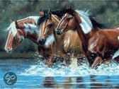Schilderen Op Nummer - Paarden