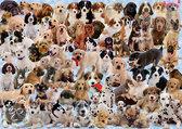 Ravensburger Dogs Galore! - Puzzel - 1000 stukjes