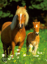 Ravensburger Puzzel - Gelukkige Paarden