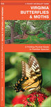 Virginia Butterflies & Moths: An Introduction to Familiar Species