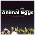 Animal Eggs (ebook)