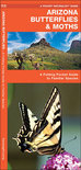 Arizona Butterflies & Moths: An Introduction to Familiar Species