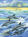 Schilderen Op Nummer - Dolfijn