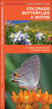 Colorado Butterflies & Moths: An Introduction to Familiar Species