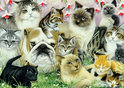 Jumbo 12 Katten en een hond - Puzzel - 1000 stukjes