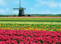 Jumbo Puzzel - Hollands Glorie: Tulpen en Molen