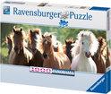 Ravensburger Panorama Puzzel - Wilde Paarden