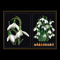 446.05 Snowdrops Panel   Borduurpakket