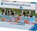 Ravensburger Panorama Puzzel - Berner Sennehonden