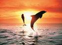 Ravensburger Puzzel - Dolfijnen Bij Zonsondergang