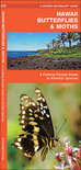 Hawaii Butterflies & Moths: An Introduction to Familiar Species
