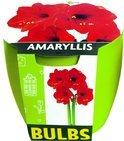 Buzzy® Bulbs Amaryllis Rood