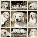 Schmidt Puzzel - Puppy's