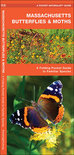 Massachusetts Butterflies & Moths: An Introduction to Familiar Species