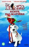 102 Echte Dalmatirs
