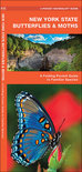 New York State Butterflies & Moths: An Introduction to Familiar Species