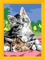 Schilderen Op Nummer - Knuffelende Katjes